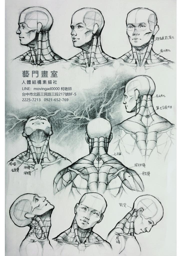 人體動物結構