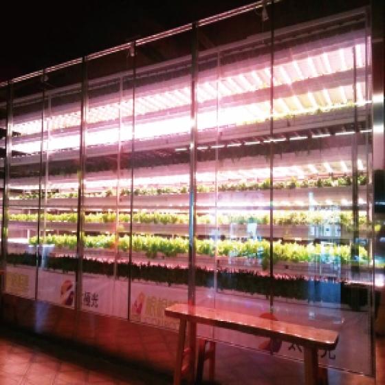 複合式餐飲植物工廠