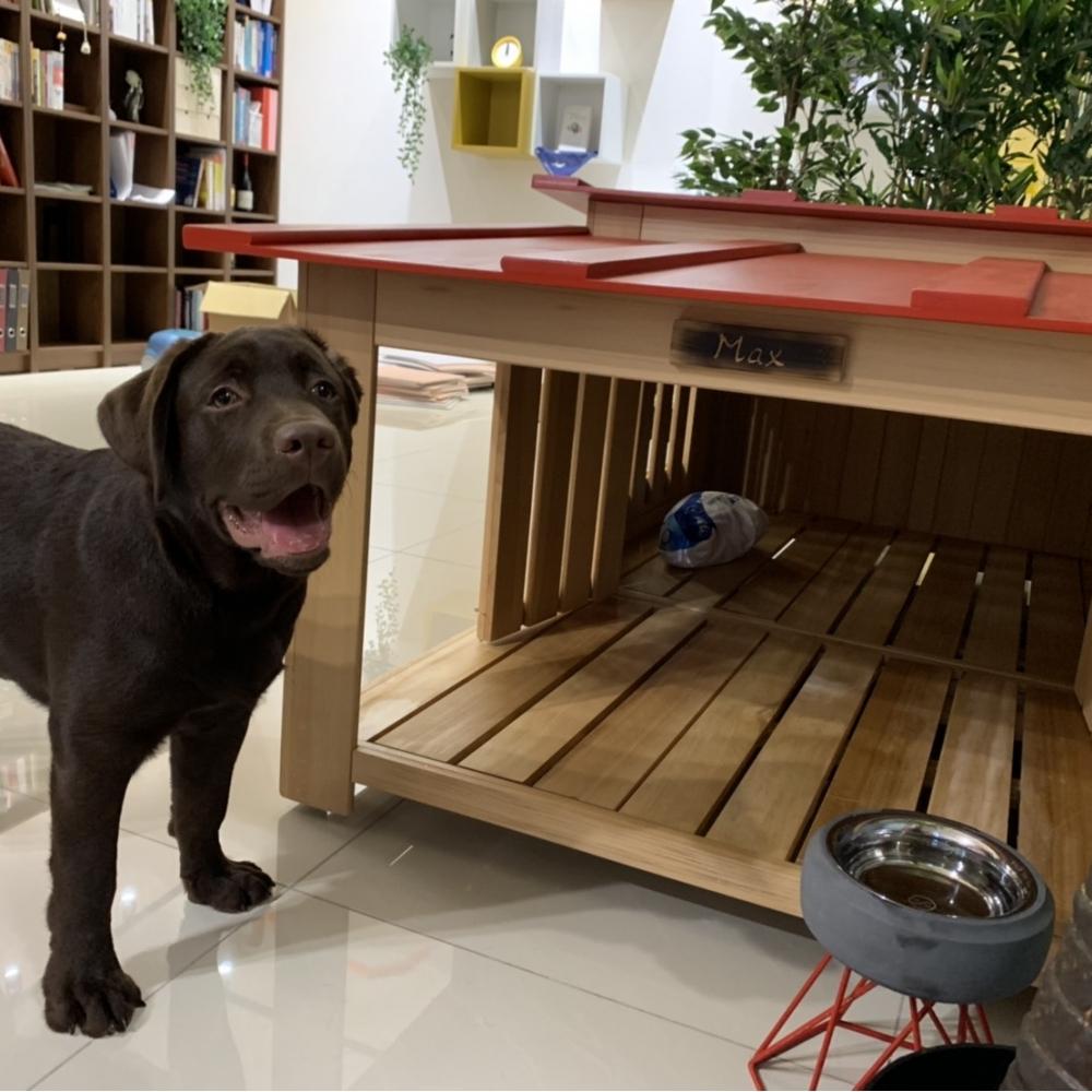 有涼亭的狗屋才高檔
