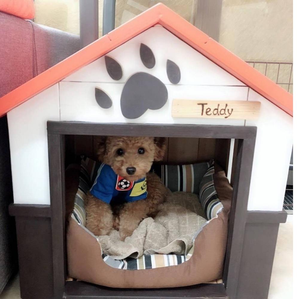 可愛小狗屋,溫馨又好