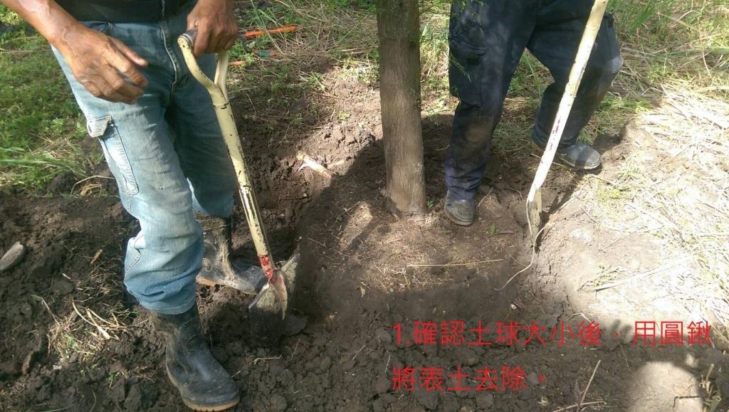 斷根養根工程